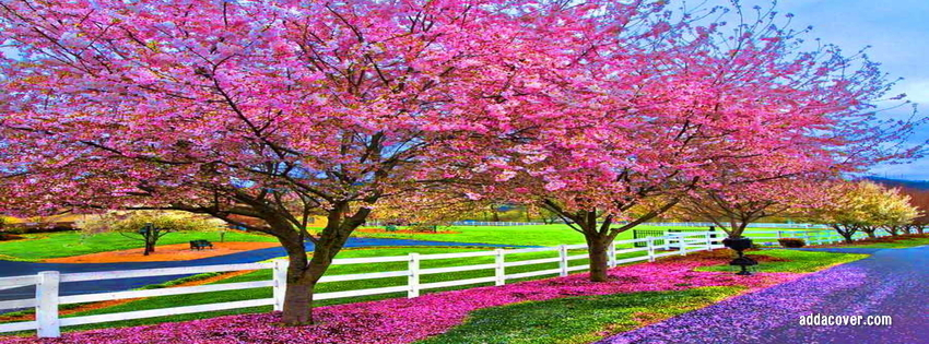 Spring Accommodation Facebook Covers: An Excellent Time! :: Clay Aiken News Network